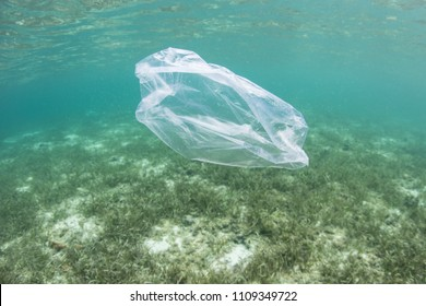 A plastic bag drifts over a seagrass meadow in Indonesia. Plastics have become a major environmental problem in all oceans.