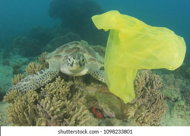 Plastic bag in ocean and sea turtle