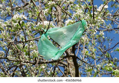 A plastic bag on a tree in bloom and blue sky
