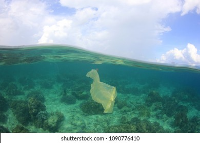 Plastic bag pollution of coral reef