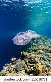 Plastic bag waste drifting across a tropical coral reef in the Red Sea