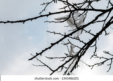 plastic bags hooked on black tree branches on the background of sky. Nature ecology catastrophe and environmental pollution concept