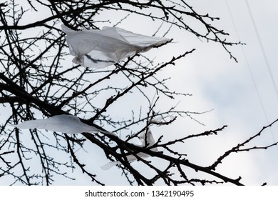 plastic bags on the branches of a tree on the white sky background.  Increasing of environmental problems: disposal of plastic bags