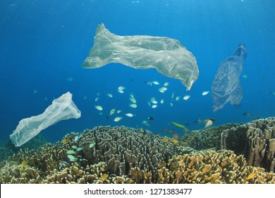Plastic bags pollute coral reef