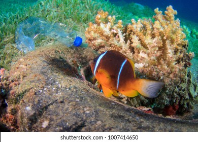 Plastic bottle lies beside a discarded tyre in which an anemone fish has made his home