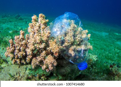 Plastic bottle on coral reef