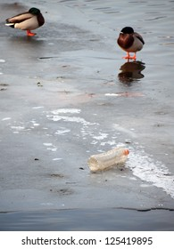 A plastic bottle and two sleeping ducks on ice