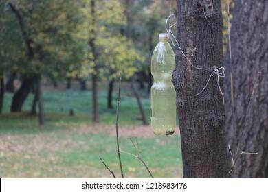 Plastic bottle used as feeder for birds in winter