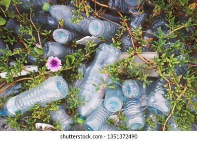 Plastic bottles in a small grass field