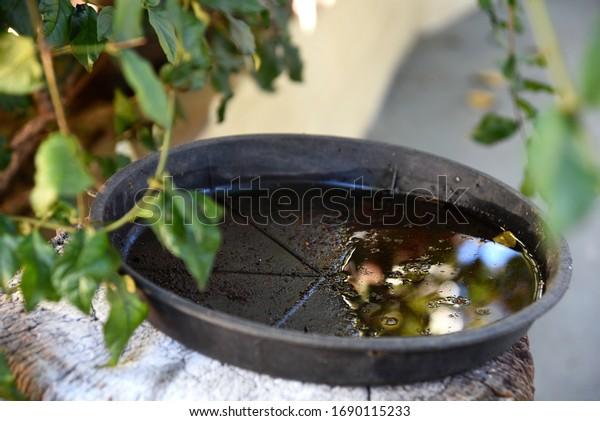 bol en plastique abandonné dans un vase avec de l'eau stagnante à l'intérieur. vue en gros plan. moustiques sur un terrain de reproduction potentiel. prolifération des moustiques aedes aegypti, de la dengue, du chikungunya, du virus zika