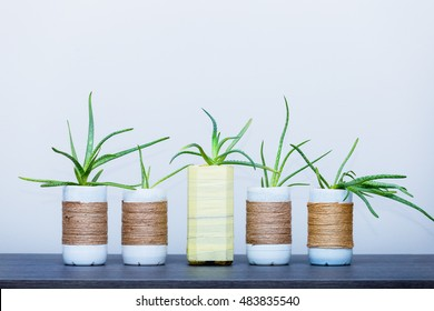 Plastic containers re used as flowers pot