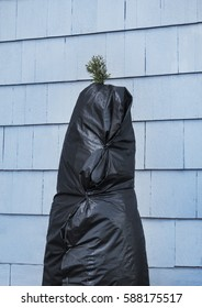 plastic cover wrapping of shrub in winter