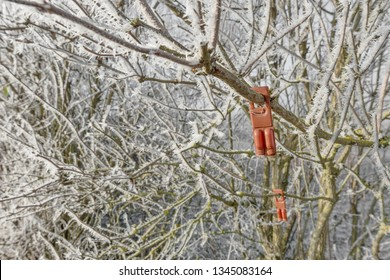 Plastic device containing pheromones as an insecticide replacement against the vine moth hang in an icy shrub.