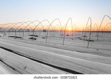 Plastic foil on field