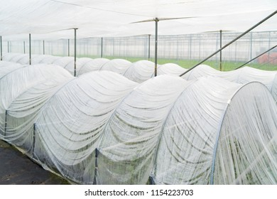 plastic greenhouse inside a larger glass greenhouse