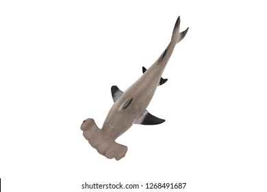 Plastic hammerhead shark toy isolated on white background. Top view