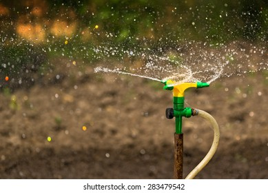 Plastic Home Gardening Irrigation Sprinkler in Operation on Cultivated Agricultural Garden
