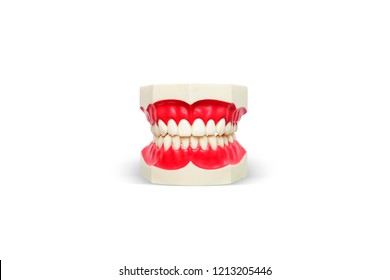 plastic human teeth models on white background