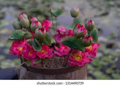 Plastic lotus flower