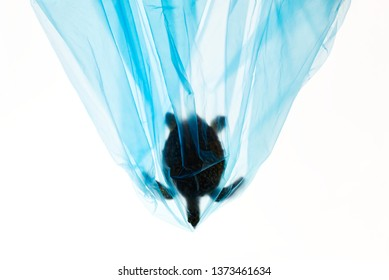 Plastic pollution creative concept advertise for campaign save oceans by photo of sea turtle model struck in blue plastic bag with copy space. Plastic bag looks transparent by studio flash light.