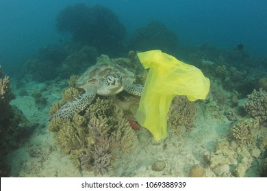 Plastic pollution environmental problem. Carrier bag discarded in sea drifts past sea turtle. Turtles can mistake plastic for the jellyfish they feed on