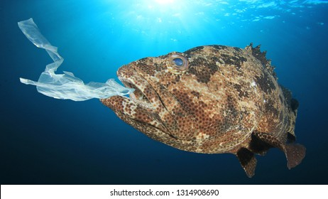 Plastic pollution environmental problem. Discarded plastic bags contaminate seafood