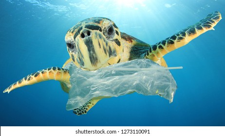 Plastic pollution environmental problem. Turtles eat plastic because it looks like jellyfish