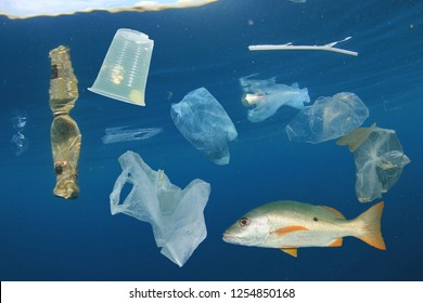 Plastic pollution and fish in ocean