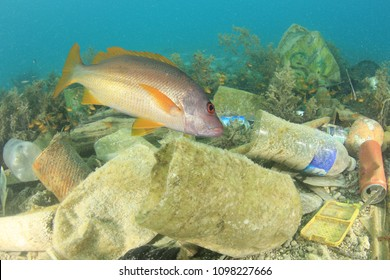 Plastic pollution and fish. Plastic in ocean contaminates seafood