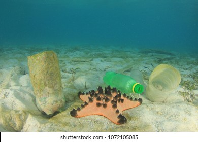 Plastic pollution in ocean. Plastic bottles pollute sea floor with starfish