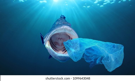 Plastic pollution in ocean contaminates seafood. Fish consume microplastics