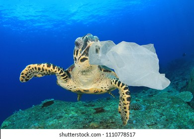 Plastic pollution in ocean environmental problem. Turtles can mistake plastic bags for jellyfish and eat them