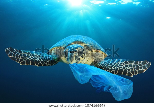 Sea turtle eating plastic bag; photo by shutterstock