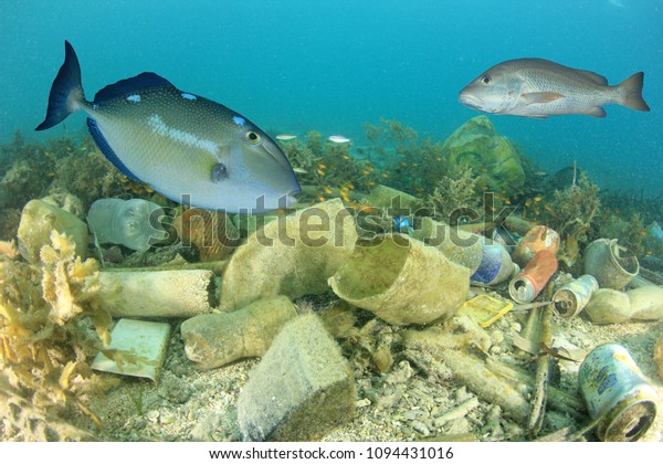 Plastic pollution on ocean reef with fish