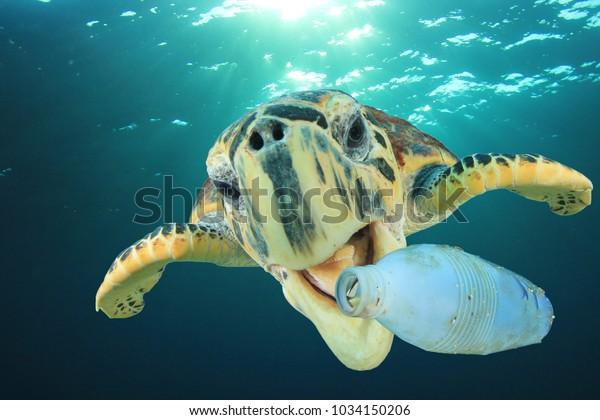 Problema de contaminación del plástico: La tortuga marina come una botella de plástico