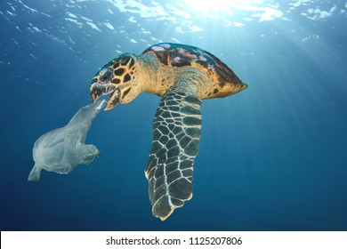 Plastic pollution problem - turtle eats plastic bag