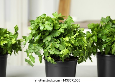 Plastic pots with fresh green parsley indoors