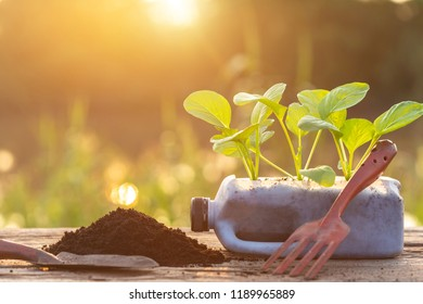 Plastic recycle concept : People planting vegetable in plastic bottle and pile of soil on wooden table with sunlight in morning time