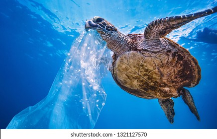 Plastic in Sea Water, turtle eating bag thinking that is a jellyfish, environmental pollution problem