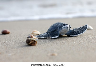 Plastic Toy Turtle on Beach