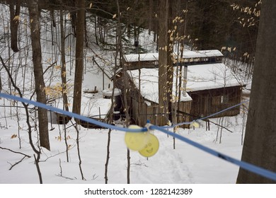 Plastic tubing connecting Maple trees on a hill to collection tank in a sugar shack Kortright Centre for Conservation,  Woodbridge, Ontario, Canada - March 1, 2015