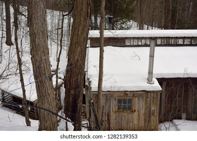 Plastic tubing tapped into Maple trees on a hill to collect sap to a sugar shack tank Kortright Centre for Conservation,  Woodbridge, Ontario, Canada - March 1, 2015