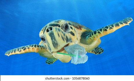Plastic underwater pollution problem. Sea Turtle eating discarded plastic straw and bags. Environmental destruction
