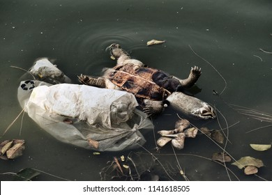 Plastic waste, Pollution problem, Dead turtle in toxic water, Contaminated environmental, Wast water.