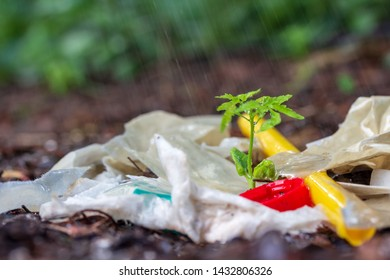 Plastic waste and Water Bottle cap on Ground  withTree seedlings and raining.