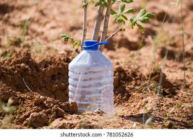 Plastic water bottle for watering in the garden