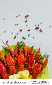 A plate of delicious snack for beer made of boiled crayfish with dill and spices on white background. Copy space