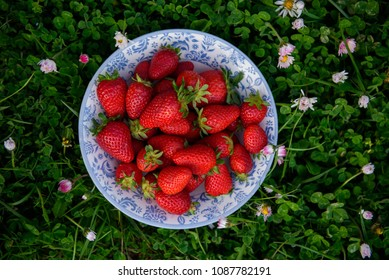 A plate with fresh strawberry on a green grass