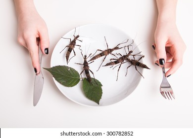 Plate full of insects in the insect to eat restaurant