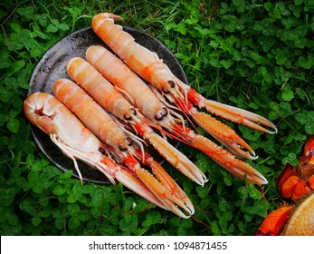 A plate of scampis